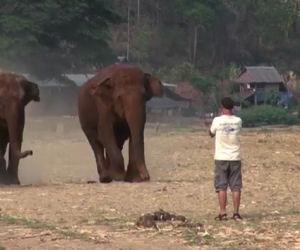 Un uomo emette un richiamo, subito arrivano i suoi amici elefanti