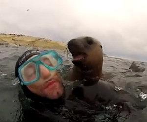 Questi sub ricevono una visita a sorpresa da cuccioli di foca