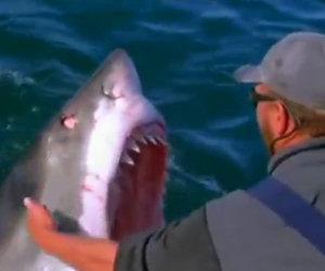 Uomo accarezza uno squalo bianco
