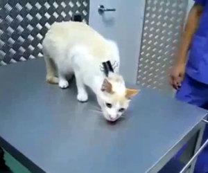 Ecco Come Disattivare Un Gatto Video Incredibili