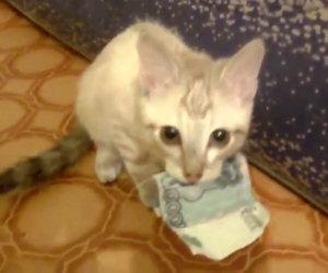 Gatto si rifiuta di restituire i soldi