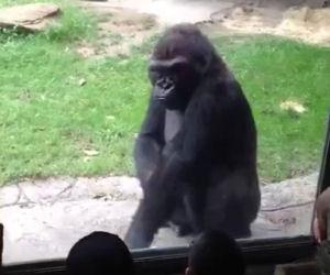 Gorilla fa vedere ai bambini chi comanda