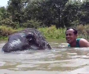 Uomo nuota con un piccolo elefante