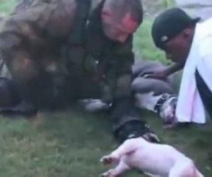 Vigili del fuoco rischiano la vita per salvare due cani pit bull