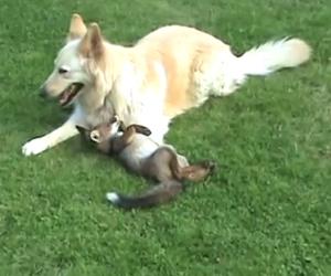 Volpe e cane migliori amici