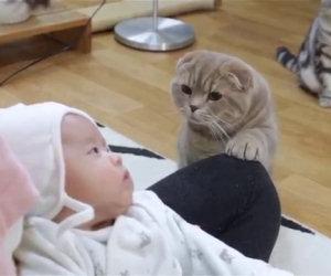 Il neonato viene portato a casa, ecco come reagiscono questi 5 gatti