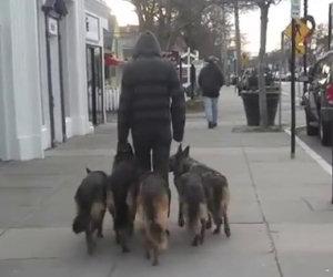 A spasso con i propri cani