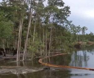 Alberi sprofondano sotto terra
