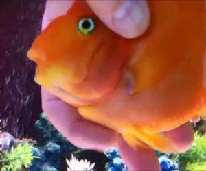 Nessuno lo immaginava ma anche i pesci rossi hanno dei sentimenti
