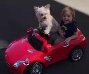 Il bambino vorrebbe guidare l'auto ma guardate cosa fa il cane