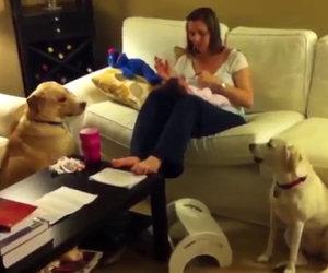Un bimbo sta facendo i capricci, ecco come interviene il cane