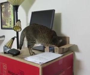 Insegnare al proprio gatto a giocare a caccia al tesoro