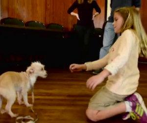 Tende la mano ad un cane abbandonato, ecco la sua reazione