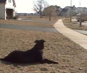 Cane aspetta il suo migliore amico