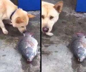 Questo cane cerca in tutti i modi di salvare un pesce