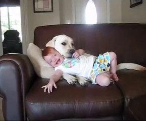 Cane coccola una bambina
