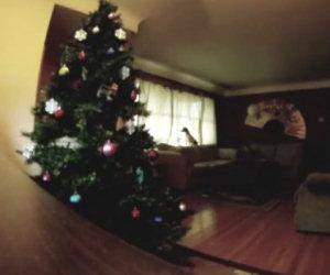 Cane distrugge l'albero di Natale