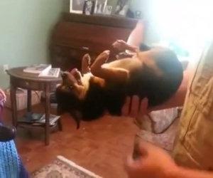 Cane dorme quando è in braccio