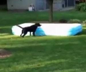 I bambini si nascondono sotto la piscina, ecco cosa fa il cane