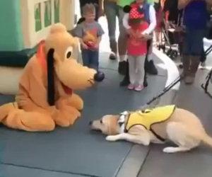 Il cane incontra Pluto a Disneyland, la sua reazione è tutta da ridere