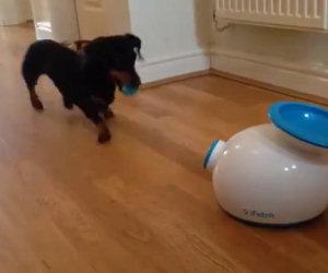 Cane lancia la pallina da solo