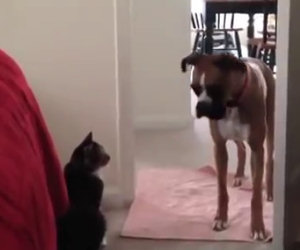 Cane, non passerai da qui!