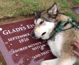 Cane piange sulla tomba