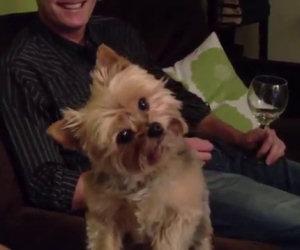 Cane reagisce ad ogni parola
