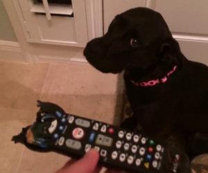 Il cane viene rimproverato, ecco la sua reazione esilarante