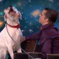 Quando il cane sale sul palco nessuno crede alle proprie orecchie