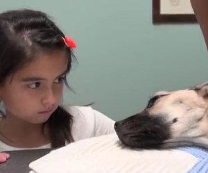 Ciò che hanno fatto a questo cane è assurdo, ecco come viene salvato