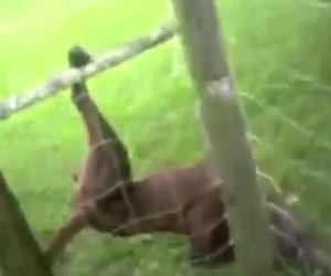 Agente salva un cane incastrato, la sua reazione vi strapperà una risata