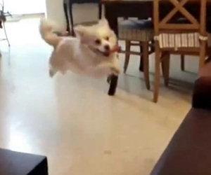 Cane sbaglia il tempo del salto