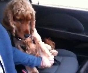 Cane sconfigge la paura dell'auto