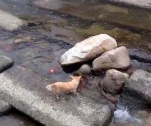Cane si lancia da solo la pallina