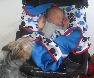 Ecco come questo dolce cane si prende cura del nuovo arrivato