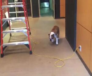 Questo cane ha paura di un cavo ma ecco la soluzione che trova