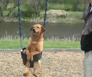 Cane vuole andare sull'altalena