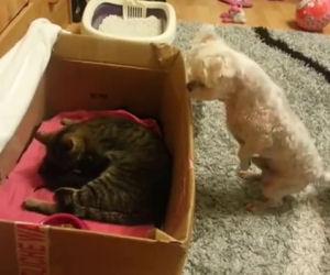 Il cane muore dalla voglia di vedere i gattini appena nati