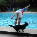 Il cane dispettoso che butta in acqua la gente a bordo piscina