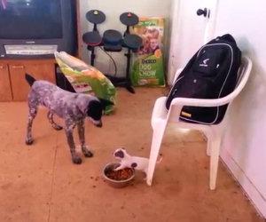 Un piccolo cane che si fa rispettare