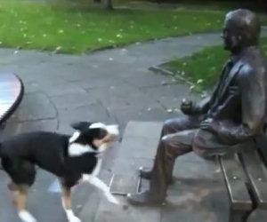Cane vuol giocare con una statua