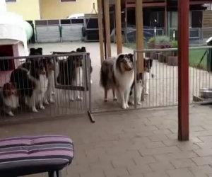 Cani aspettano pazienti la pappa