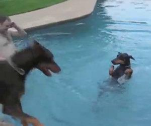 Ci sono cani che amano tanto nuotare. Eccone alcuni divertentissimi!