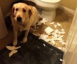 Come reagiscono i cani che hanno appena combinato un disastro?
