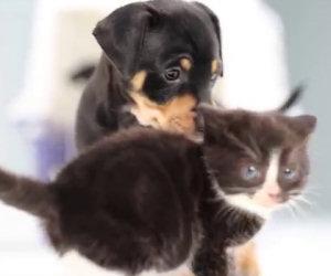 In questi box ci sono cani e gatti, ecco cosa accade quando le aprono