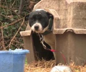 Provate a non commuovervi vedendo questi cani che vengono liberati