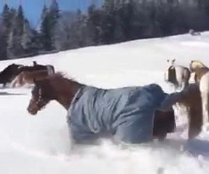 Tutta la dolcezza di questi cavalli che giocano felici sulla neve