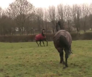 Questi cavalli sono stati separati per anni. Adesso si ritrovano così!