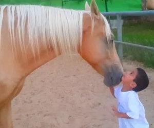 Un cavallo si avvicina ad un bambino speciale. Un video emozionante!